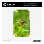Libélula aterrizada en la planta de jardín verde iPod touch 4G skin