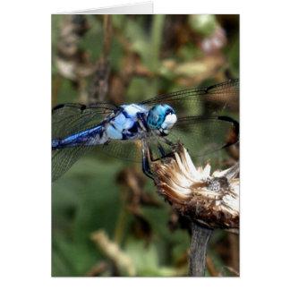 Libélula azul de las libélulas en una foto de la c felicitacion