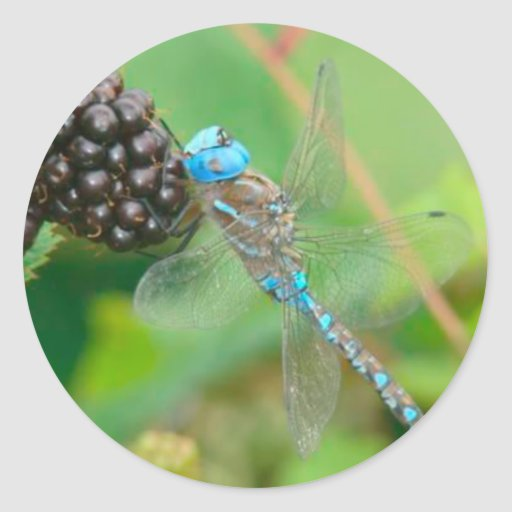 Libélula azul que come al pegatina de las