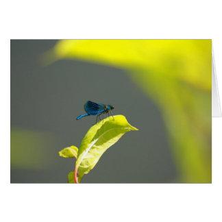libélula azul tarjeta pequeña