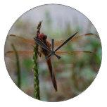 Libélula cardinal de Meadowhawk Reloj De Pared