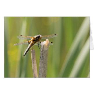 libélula Cuatro-manchada del cazador Tarjeta De Felicitación