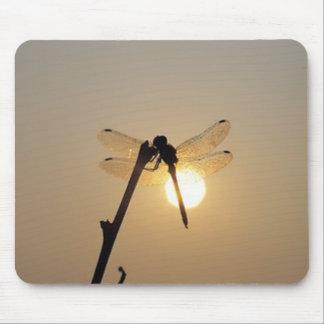 Libélula de reclinación en la puesta del sol tapetes de ratón