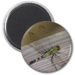 Libélula del insecto imán para frigorífico