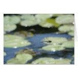 libélula del vuelo tarjeta de felicitación
