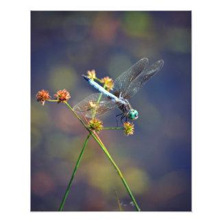 Libélula en descanso, la joya de la naturaleza arte fotográfico