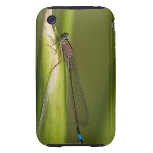 Libélula en el iris florecido funda though para iPhone 3