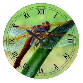 Libélula en el reloj de pared macro del áloe