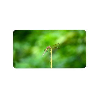 libélula en insecto amarillo del fondo del verde d etiquetas de dirección