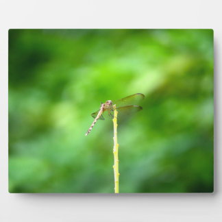 libélula en insecto amarillo del fondo del verde placa para mostrar