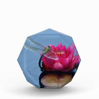 Libélula en la flor de Lotus