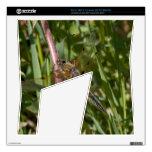 Libélula en las malas hierbas skins para xbox 360 s