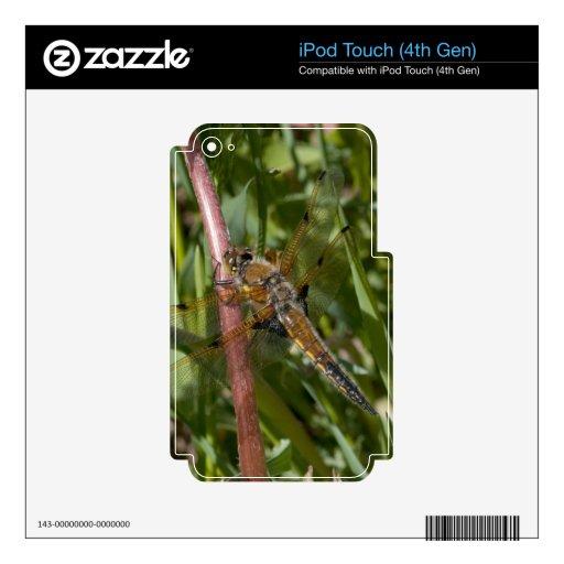 Libélula en las malas hierbas iPod touch 4G calcomanía