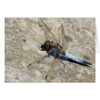 libélula en piedra tarjeta pequeña