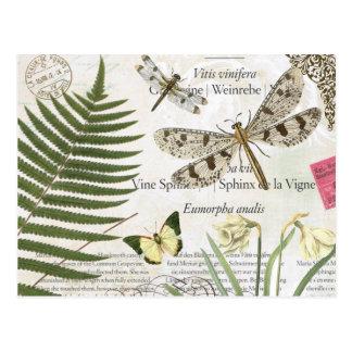 libélula moderna del francés del vintage postal