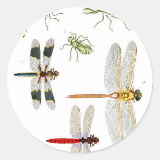 libélula pegatina redonda
