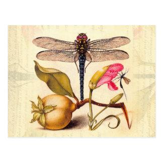 Libélula, pera, clavel, e insecto postales