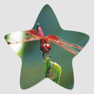 Libélula roja y negra frontal pegatina en forma de estrella