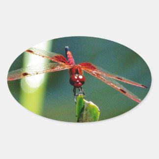 Libélula roja y negra frontal pegatina ovalada