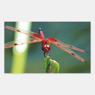 Libélula roja y negra frontal pegatina rectangular