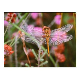 Libélula rosada en la postal de las flores