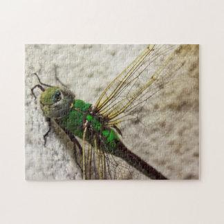Libélula verde de Darner que descansa sobre una Rompecabezas Con Fotos