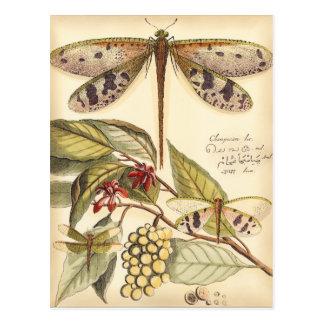 Libélulas con las hojas y la fruta tarjetas postales