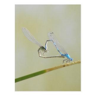 libélulas en amor postales