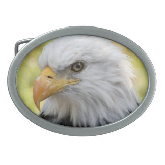 Libertad de Falln Eagle calvo Hebillas De Cinturon Ovales