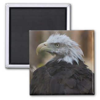 Liberty Magnet 2 Inch Square Magnet