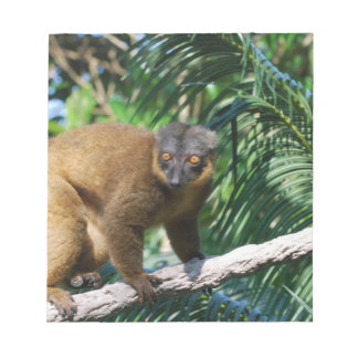 Libreta agarrada del Lemur Blocs De Papel