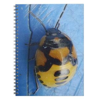 Libreta Con Fotos 80 Páginas Escarabajos