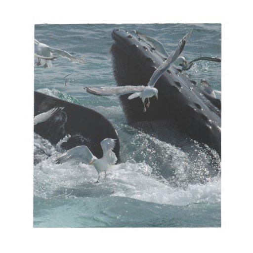 Libreta de la ballena jorobada bloc