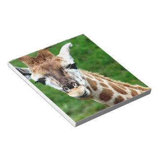 Libreta de la foto de la jirafa blocs de notas