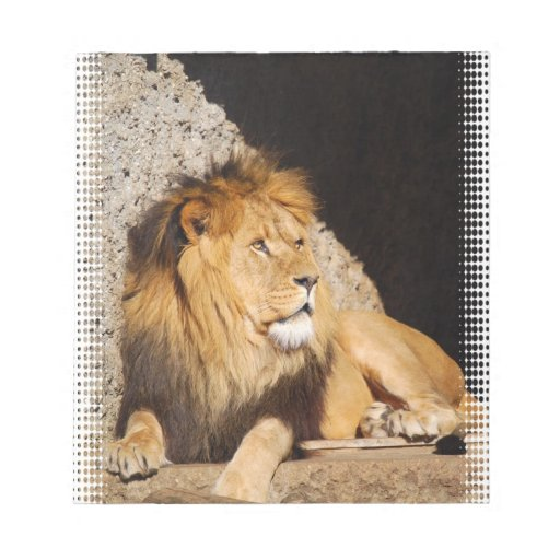 Libreta de la foto del león blocs de papel