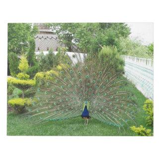 Libreta de la fotografía del pavo real bloc de notas
