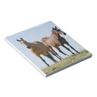 Libreta de los pares del caballo del mustango bloc de notas