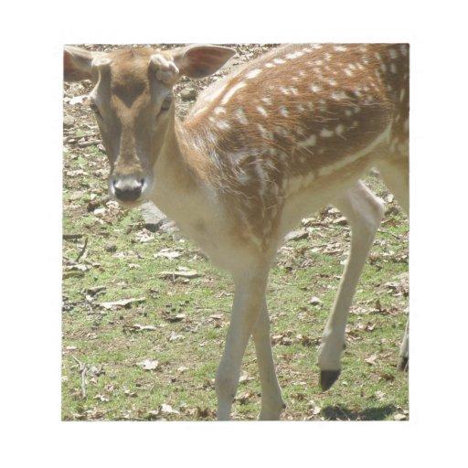 Libreta del cervatillo de los ciervos bloc de notas
