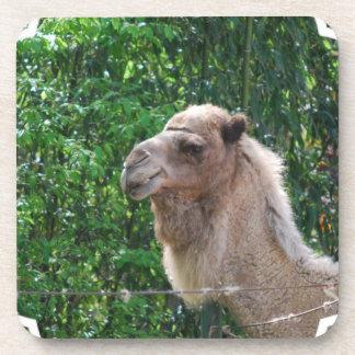 Libreta del diseño de la foto del camello posavasos de bebida