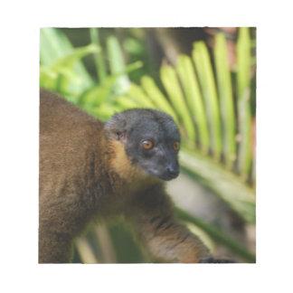 Libreta del Lemur de Brown Bloc De Papel