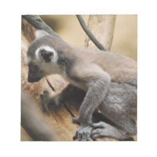 Libreta del Lemur del bebé Libreta Para Notas