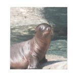 Libreta del león marino del bebé bloc