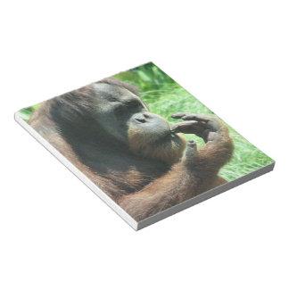 Libreta del mono del orangután blocs de notas