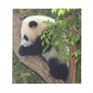 Libreta del oso de panda gigante bloc de papel