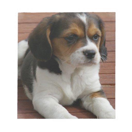Libreta del perro de perrito del beagle libretas para notas