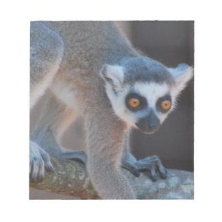 Libreta joven del Lemur Blocs De Notas