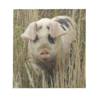 Libreta linda del cerdo bloc