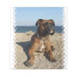 Libreta linda del perro del boxeador bloc de notas