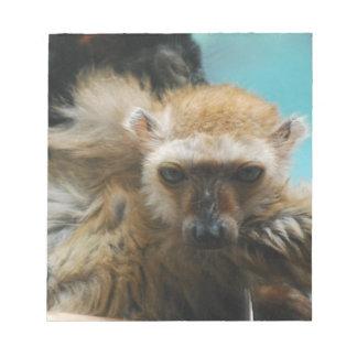 Libreta observada azul del Lemur Libreta Para Notas