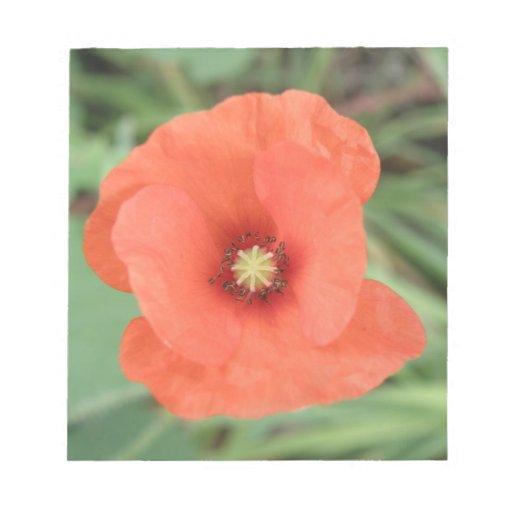 Libreta salvaje de la flor de la amapola blocs de notas